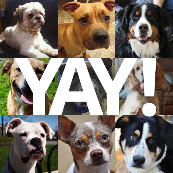 All of our dogs have been adopted!